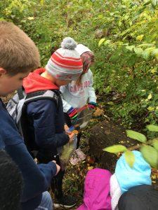 Students study woodland.